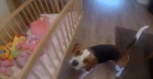 Dog and Baby 4