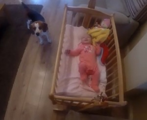Dog and Baby2