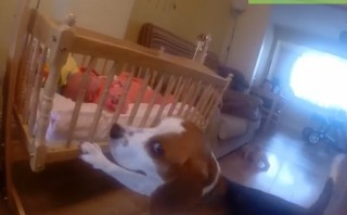 Life is precious moment: dog rocks baby in cradle